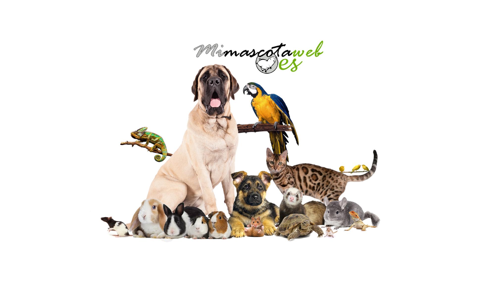 Mi Mascota Web
